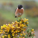 Oiseaux menacés : ce qui change dans la liste rouge de 2016