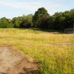 Friches urbaines et industrielles : une biodiversité de transition