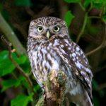 Etudes d'impacts : comment inventorier la faune nocturne ?