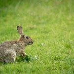Prendre en compte la stratégie démographique des espèces pour leur conservation