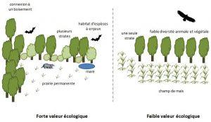 schéma valeur écologique d'une haie