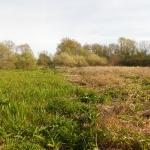Compensation écologique : mission impossible ?