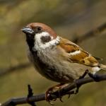 Quelles espèces animales nécessitent un avis du CNPN ? (arrêté du 6 janvier 2020)