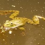 Protection des reptiles et des amphibiens : ce qui change avec l'arrêté du 8 janvier 2021