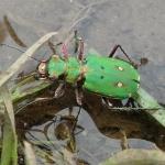 Coléoptères : la grande inconnue