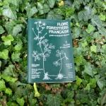 """Notre avis sur la """"Flore Forestière Française"""" (Rameau, Mansion et Dumé)"""