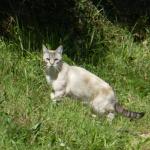 Prédation par les chats : quel risque pour la faune sauvage ?
