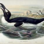 Enquête sur les espèces d'oiseaux disparues